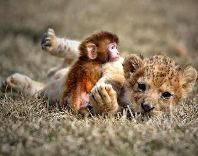 Tan chảy với loạt ảnh về tình yêu mù quáng của các con vật không cùng giống loài - Ảnh 3.