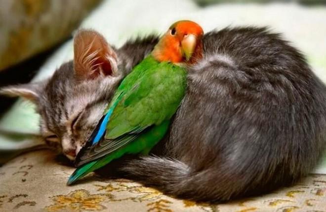 Tan chảy với loạt ảnh về tình yêu mù quáng của các con vật không cùng giống loài - Ảnh 6.