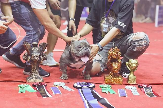 Thanh niên Việt rút 2,6 tỷ trong ngân hàng, lặn lội sang nước ngoài để mua bằng được chú chó mình yêu thích - Ảnh 6.