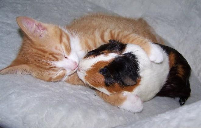 Tan chảy với loạt ảnh về tình yêu mù quáng của các con vật không cùng giống loài - Ảnh 8.