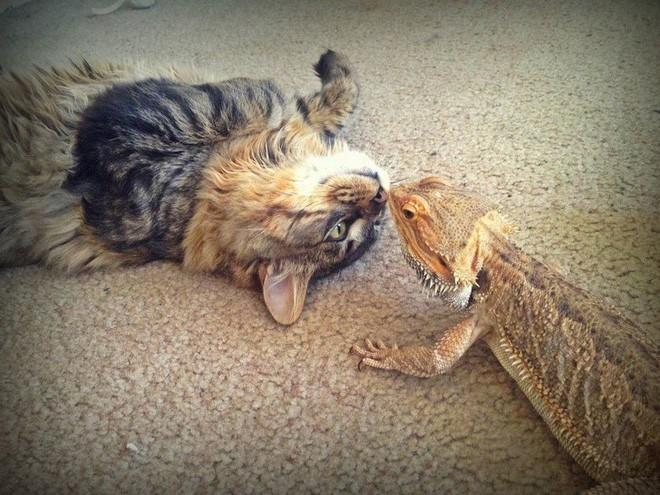 Tan chảy với loạt ảnh về tình yêu mù quáng của các con vật không cùng giống loài - Ảnh 9.