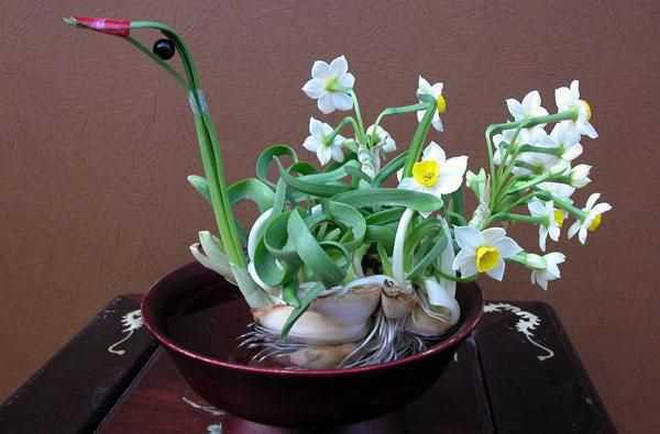 Những loại hoa mang tài, rước lộc vào nhà nhất định phải trưng ngày Tết - Ảnh 6.