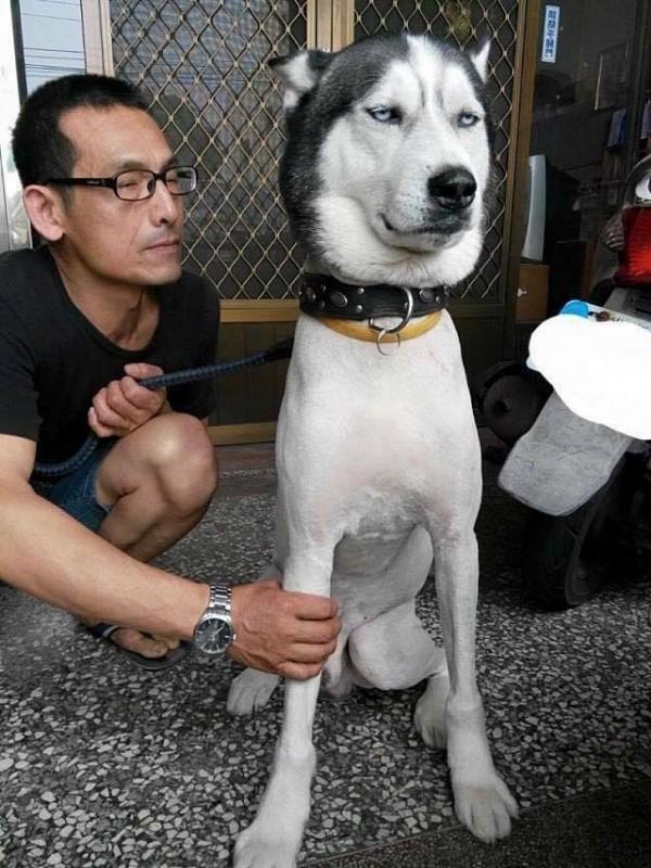 Chú chó trắng và bộ lông gây ồn ào trên mạng xã hội - Ảnh 3.