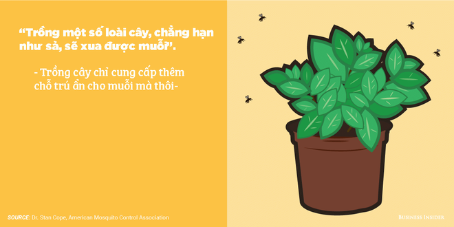 7 quan niệm sai lầm về phòng tránh muỗi: Hóa ra trồng sả có thể phản tác dụng - Ảnh 3.