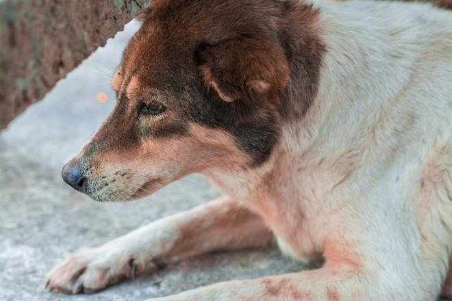 Nam thanh niên bất lực nhìn chú chó cưng nuôi 7 - 8 năm ngày một lả đi vì bị lưỡi câu mắc trong cổ họng - Ảnh 2.