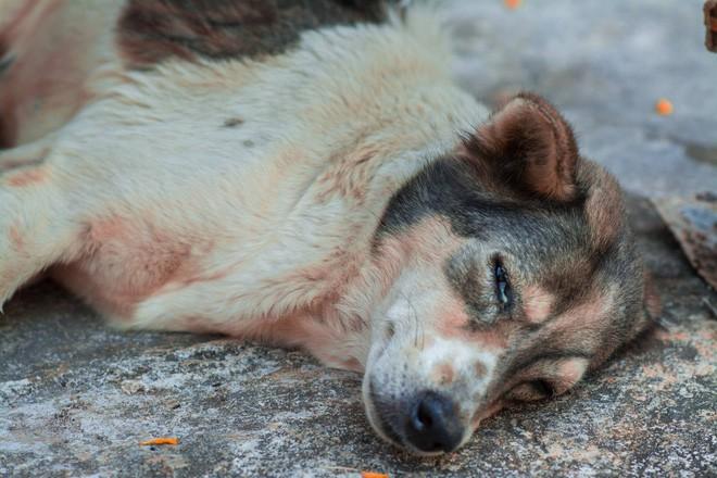 Nam thanh niên bất lực nhìn chú chó cưng nuôi 7 - 8 năm ngày một lả đi vì bị lưỡi câu mắc trong cổ họng - Ảnh 3.