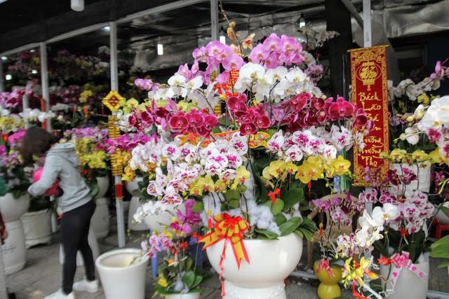 1 triệu đồng một cành lan, người Sài Gòn đổ xô mua - Ảnh 5.