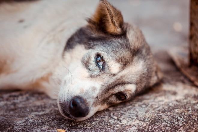 Nam thanh niên bất lực nhìn chú chó cưng nuôi 7 - 8 năm ngày một lả đi vì bị lưỡi câu mắc trong cổ họng - Ảnh 6.