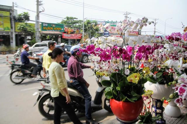 1 triệu đồng một cành lan, người Sài Gòn đổ xô mua - Ảnh 6.
