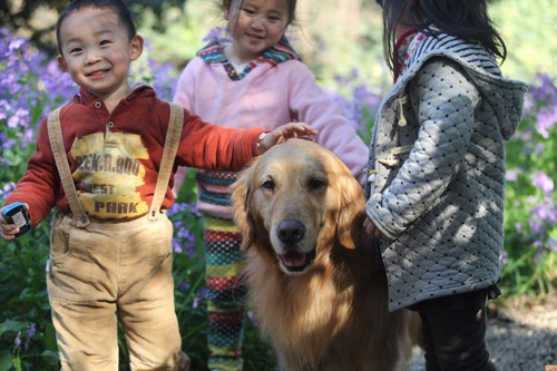2018 trong kỳ vọng vượng lộc của người Trung Quốc - ảnh 1