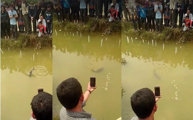 Người dân đổ xô đến xem một con cá nổi dưới mương ngày Tết - Ảnh 3.