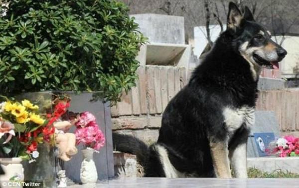 Sau 11 năm âm dương cách biệt, cuối cùng chú chó 'trung thành nhất thế giới' cũng được đến bên chủ - Ảnh 1.