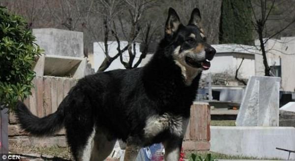 Sau 11 năm âm dương cách biệt, cuối cùng chú chó 'trung thành nhất thế giới' cũng được đến bên chủ - Ảnh 2.