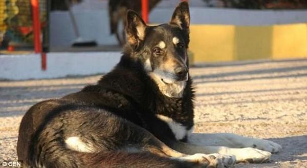 Sau 11 năm âm dương cách biệt, cuối cùng chú chó 'trung thành nhất thế giới' cũng được đến bên chủ - Ảnh 3.