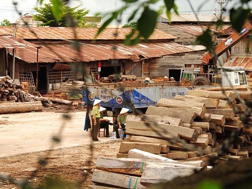 Khai trừ đảng 2 cán bộ kiểm lâm ký khống hàng trăm m3 gỗ lậu - Ảnh 1.