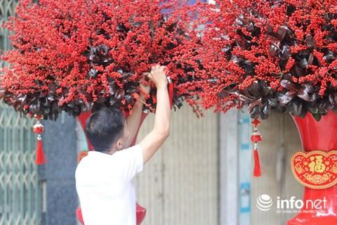 Đại gia chi 100 triệu đồng chơi hoa mai Mỹ, đông đào đỏ nhập từ Hà Lan - Ảnh 1.