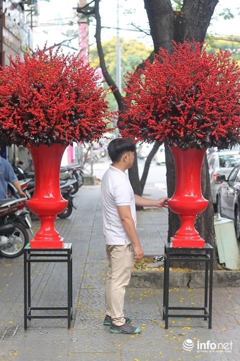 Đại gia chi 100 triệu đồng chơi hoa mai Mỹ, đông đào đỏ nhập từ Hà Lan - Ảnh 2.