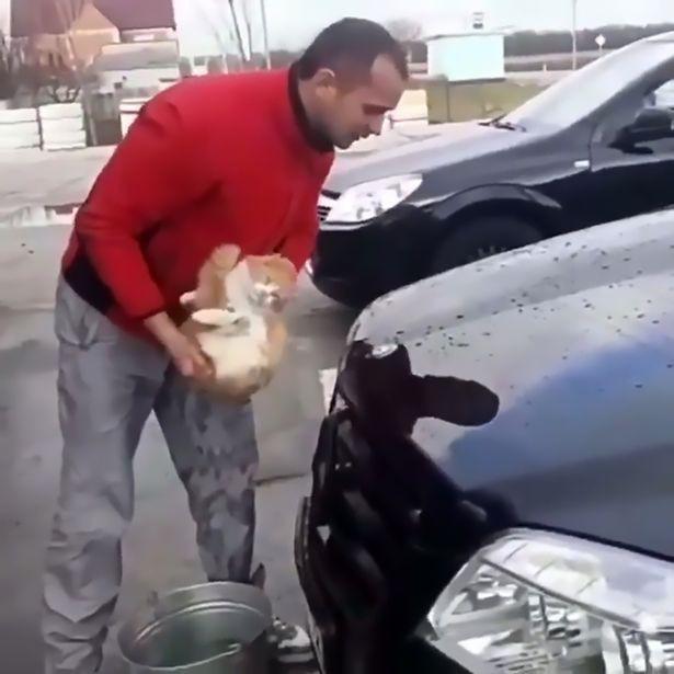 Phát hiện chú mèo nằm ngủ dưới xe, thanh niên gây phẫn nộ khi đem mèo nhúng nước, làm giẻ lau chiếc Mercedes - Ảnh 2.