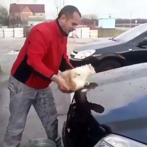 Phát hiện chú mèo nằm ngủ dưới xe, thanh niên gây phẫn nộ khi đem mèo nhúng nước, làm giẻ lau chiếc Mercedes - Ảnh 3.