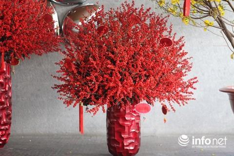 Đại gia chi 100 triệu đồng chơi hoa mai Mỹ, đông đào đỏ nhập từ Hà Lan - Ảnh 3.
