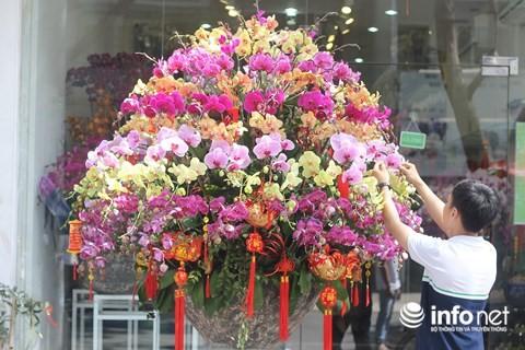 Đại gia chi 100 triệu đồng chơi hoa mai Mỹ, đông đào đỏ nhập từ Hà Lan - Ảnh 4.