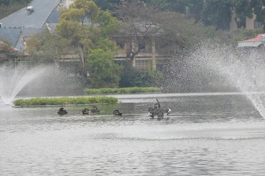 GS Lê Văn Lan: Thả thiên nga ở Hồ Gươm là rất thuận, hợp lí - Ảnh 5.