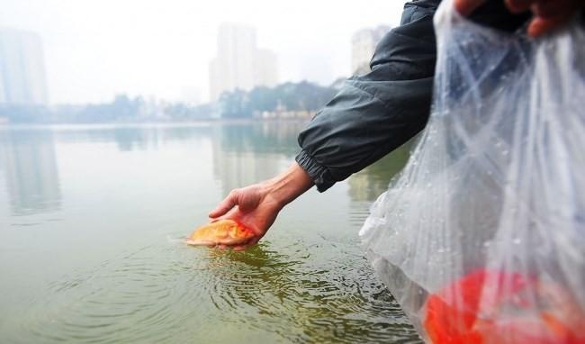 Con số giật mình từ thói quen xấu khi thả cá chép ngày 23 tháng Chạp 1