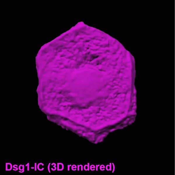 Sự kì diệu của làn da: Bong 500 triệu tế bào mỗi ngày nhưng không bao giờ bị thủng - Ảnh 5.