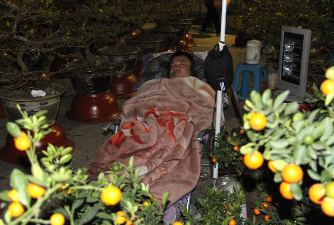Trắng đêm ngồi co ro đốt củi sưởi ấm để canh đào, quất, hoa Tết 19