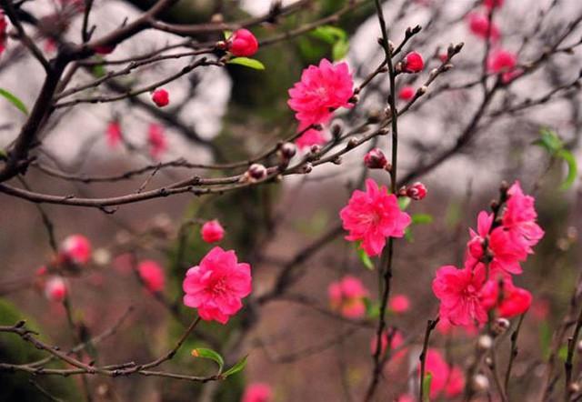Những loại hoa mang tài, rước lộc vào nhà nhất định phải trưng ngày Tết - Ảnh 1.