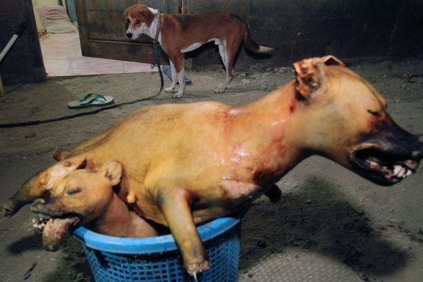 Nhìn những bức ảnh đầy cay đắng và xót xa này, bạn sẽ thề không bao giờ ăn thịt chó nữa! - Ảnh 5.