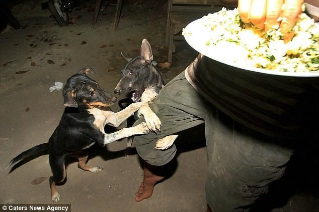 Nhìn những bức ảnh đầy cay đắng và xót xa này, bạn sẽ thề không bao giờ ăn thịt chó nữa! - Ảnh 10.