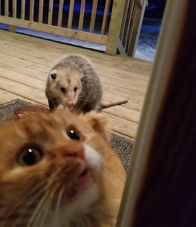 [Vui] Thêm một chú mèo nổi như cồn trên mạng vì phản ứng cực dễ thương khi bị cướp đồ ăn - Ảnh 3.