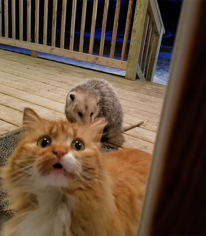 [Vui] Thêm một chú mèo nổi như cồn trên mạng vì phản ứng cực dễ thương khi bị cướp đồ ăn - Ảnh 4.