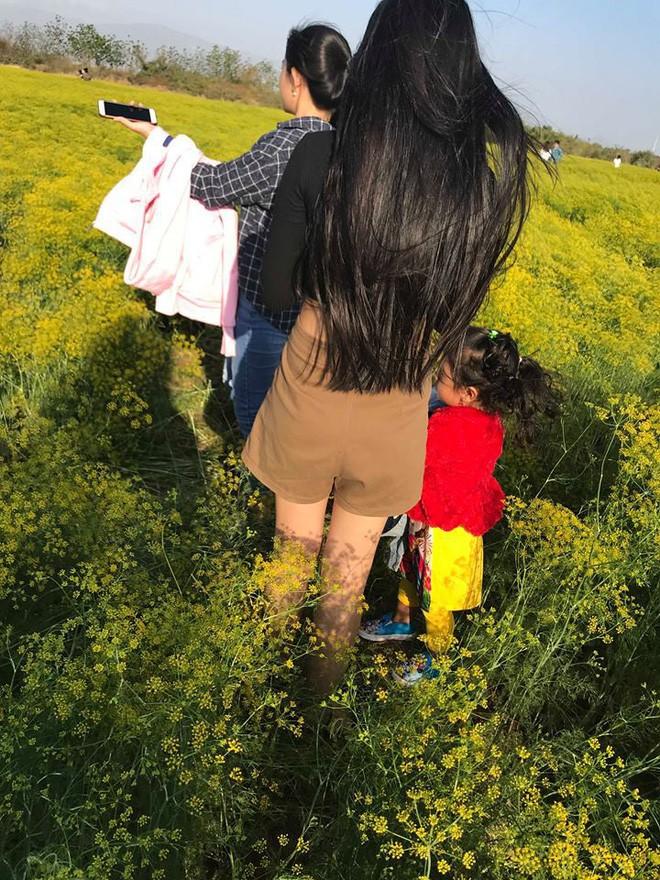Cánh đồng hoa thì là ở Ninh Thuận vừa mở cửa 4 ngày đã vội vàng đóng cửa do bị khách tham quan giẫm đạp - Ảnh 6.