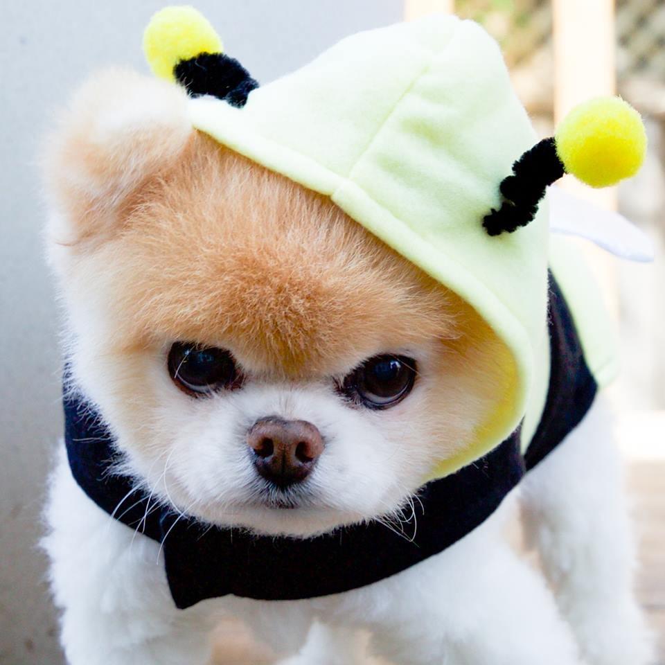 Chú mèo \u0027Chó\u0027 ở Hải Phòng nổi tiếng cũng chưa bằng con chó có
