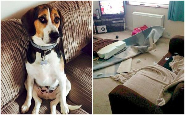 Chú chó Husky cắn rách hết sổ hộ khẩu của 'sen' chỉ vì lý do 'củ chuối' này! - ảnh 7