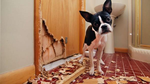 Chú chó Husky cắn rách hết sổ hộ khẩu của 'sen' chỉ vì lý do 'củ chuối' này! - ảnh 8
