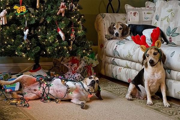 Chú chó Husky cắn rách hết sổ hộ khẩu của 'sen' chỉ vì lý do 'củ chuối' này! - ảnh 10