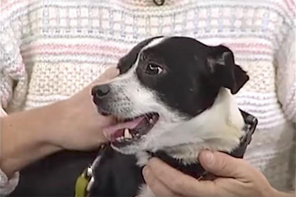 Đau đớn chôn chú chó cưng bị xe đụng chết, 14 tiếng sau cả nhà không tin nổi điều đang đợi họ trước cửa - Ảnh 2.