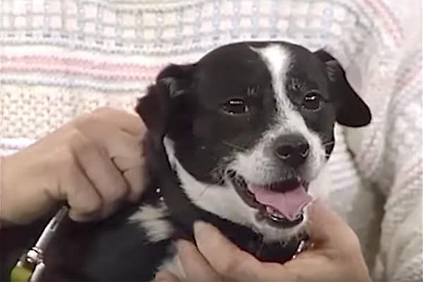 Đau đớn chôn chú chó cưng bị xe đụng chết, 14 tiếng sau cả nhà không tin nổi điều đang đợi họ trước cửa - Ảnh 4.