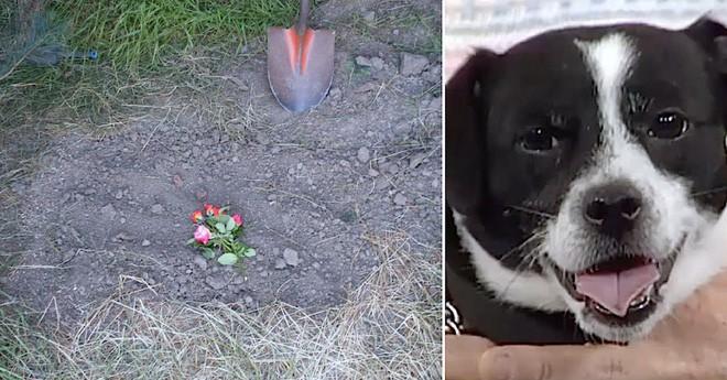 Đau đớn chôn chú chó cưng bị xe đụng chết, 14 tiếng sau cả nhà không tin nổi điều đang đợi họ trước cửa - Ảnh 5.