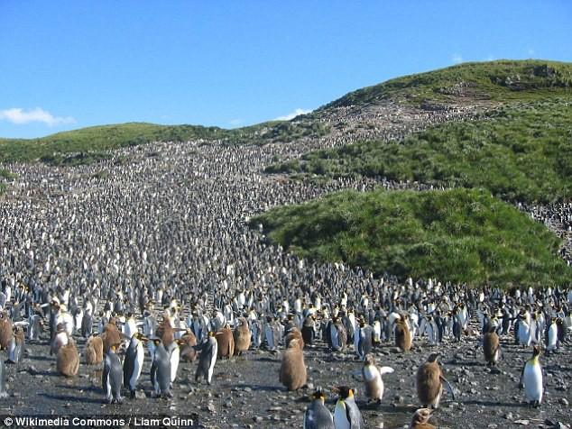 Khi hoàng đế băng hà: Vua của chim cánh cụt có thể vĩnh viễn bị xóa sổ trong tương lai gần - Ảnh 6.