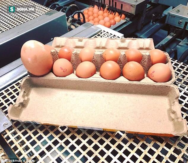 Quả trứng khổng lồ to như nắm đấm, đến lúc đập ra còn có một điều bất ngờ hơn - Ảnh 4.