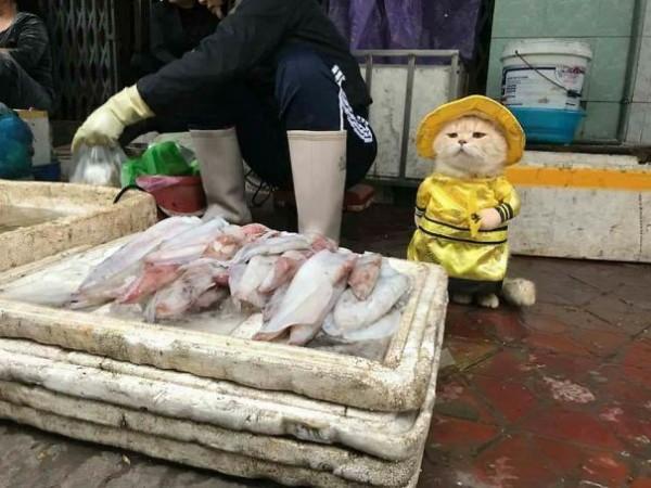Chú mèo tên Chó đeo kính râm, mặc đồ 'chất lừ' ở chợ Hải Phòng gây sốt trang tin nước ngoài - Ảnh 1.