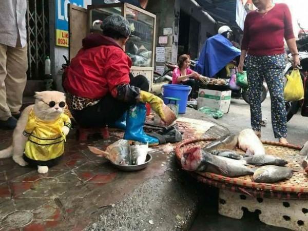 Chú mèo tên Chó đeo kính râm, mặc đồ 'chất lừ' ở chợ Hải Phòng gây sốt trang tin nước ngoài - Ảnh 2.