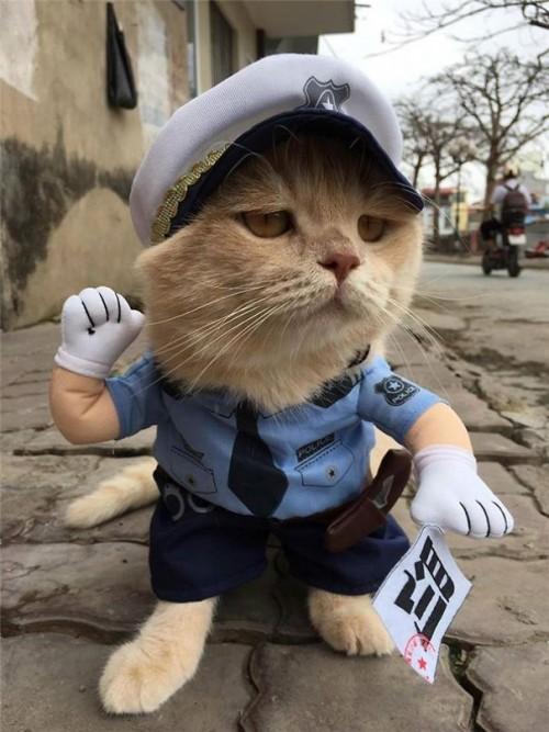 Chú mèo tên Chó đeo kính râm, mặc đồ 'chất lừ' ở chợ Hải Phòng gây sốt trang tin nước ngoài - Ảnh 11.