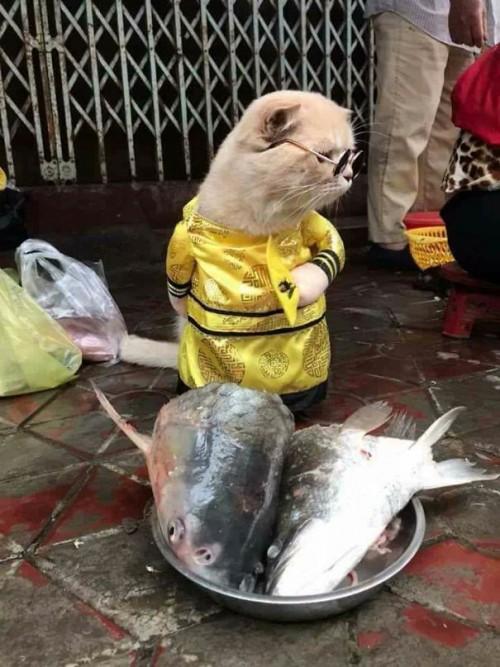 Chú mèo tên Chó đeo kính râm, mặc đồ 'chất lừ' ở chợ Hải Phòng gây sốt trang tin nước ngoài - Ảnh 3.
