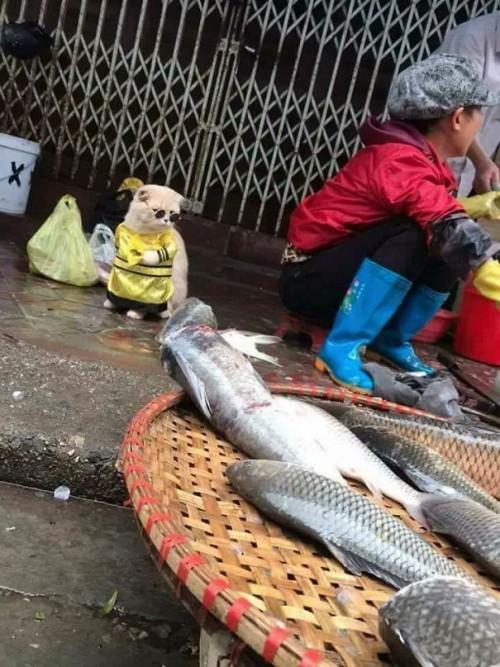 Chú mèo tên Chó đeo kính râm, mặc đồ 'chất lừ' ở chợ Hải Phòng gây sốt trang tin nước ngoài - Ảnh 4.