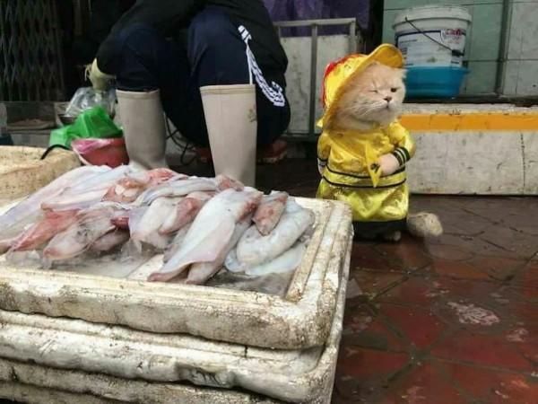 Chú mèo tên Chó đeo kính râm, mặc đồ 'chất lừ' ở chợ Hải Phòng gây sốt trang tin nước ngoài - Ảnh 5.